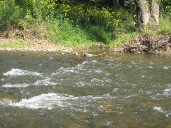 Fort Lewis Lodge: Fishing on the Cowpasture River