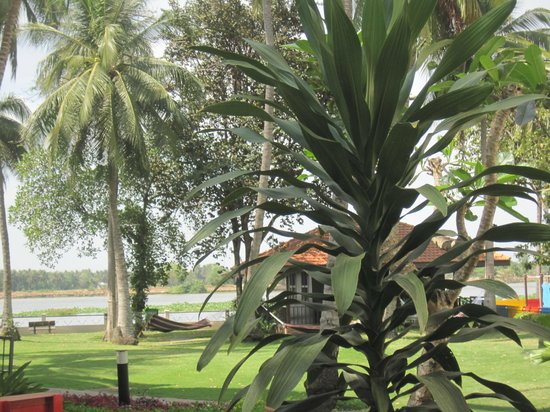 Riverside Serviced Apartments: another beautiful view of the garden