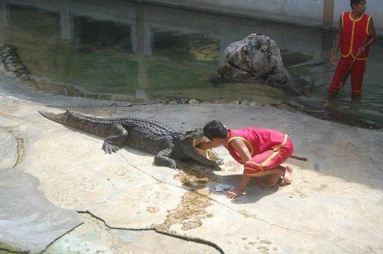 Samutprakan Crocodile Farm and Zoo : Nerves of steel!