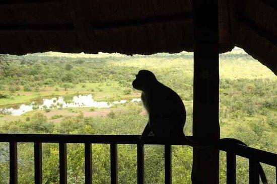 Imbabala Zambezi Safari Lodge : Visitor