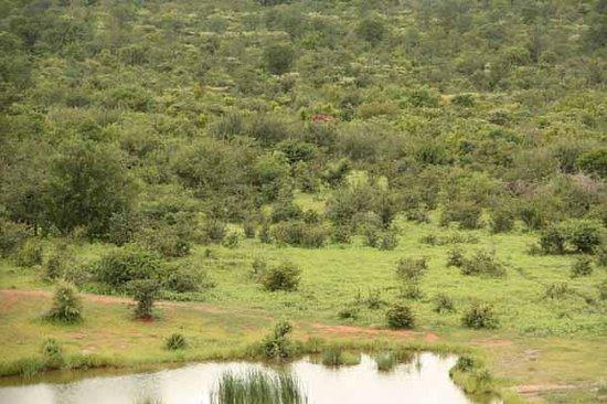 Imbabala Zambezi Safari Lodge : Elephants near the Watering Hole