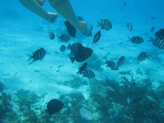 Ocean Frontiers: Snorkeling