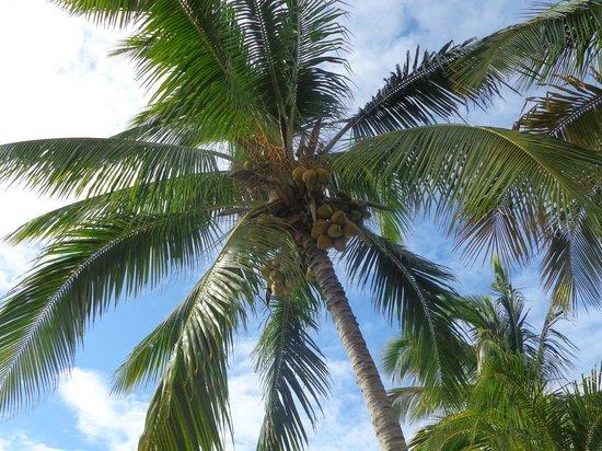 Be Live Experience Turquesa: кокосики, которые кстати нам периодически разбивали и давали и попить и поесть)))))