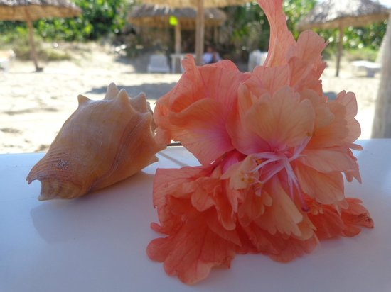 Be Live Experience Turquesa: а вот эти подарочки мы получали от человечка, который носил нам лежаки на пляже....опять же вним
