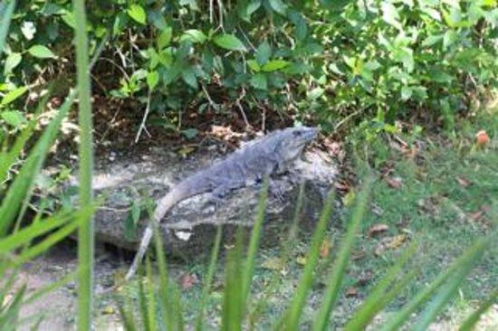 Grand Sirenis Riviera Maya Resort & Spa: wildlife at the resort