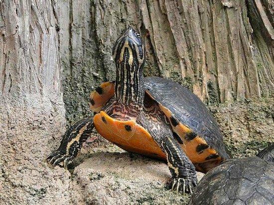 North Carolina Aquarium on Roanoke Island: turtle