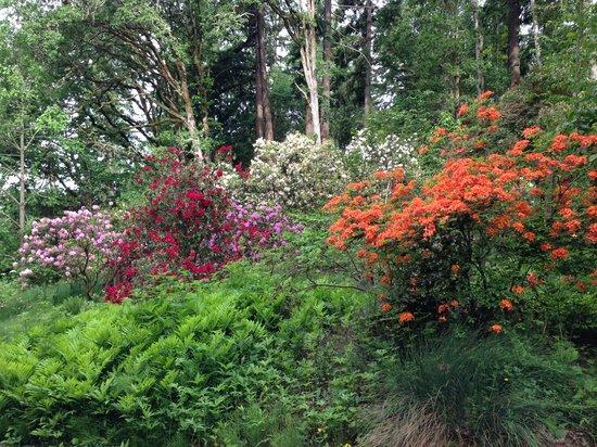 Eugene, OR: Rhododendron Garden