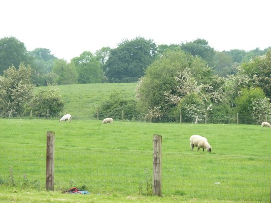Eaglehill B&B: The view from the back of the property