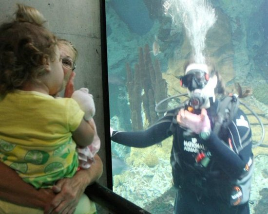National Aquarium, Baltimore : SCUBA diver was a real attraction to the kids while feeding fish.