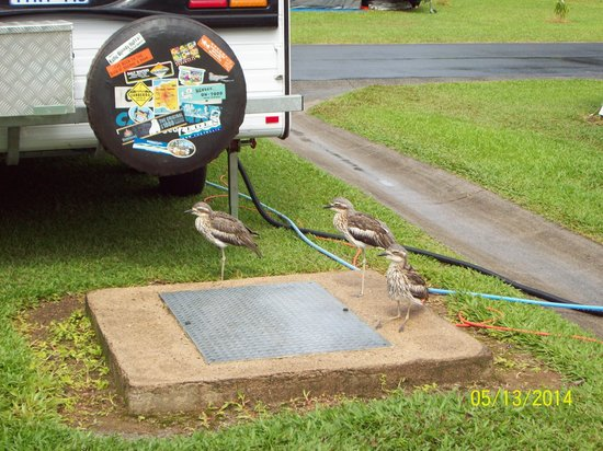 BIG4 Cairns Crystal Cascades Holiday Park: Curlews