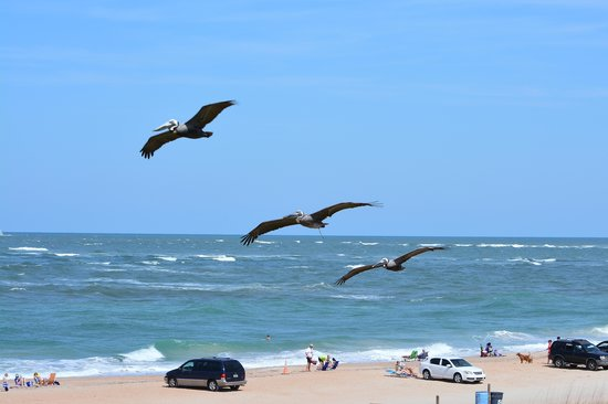 The Saint Augustine Beach House: Pelicans from the balcony