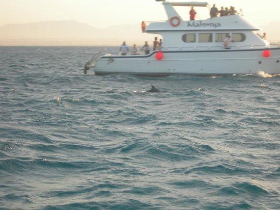 Mahmya Island : delfini.....