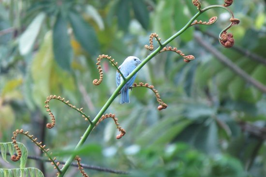 Arenal Springs Resort and Spa: Bird in the grounds