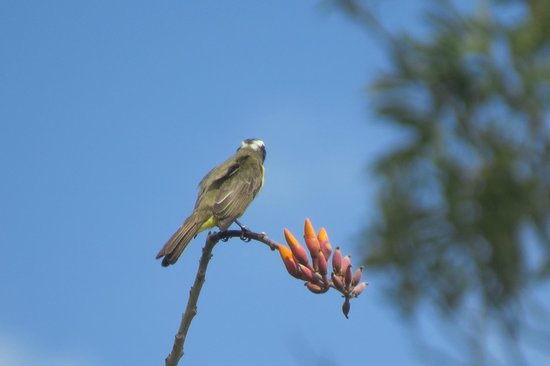 Arenal Springs Resort and Spa: birds in the grounds