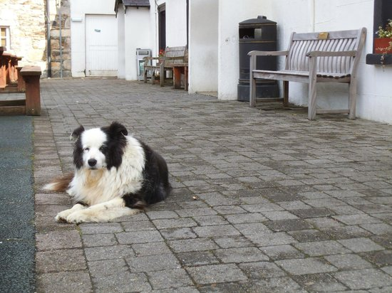 Glenmalure Lodge: Meghan, the Watchdog