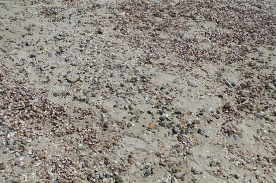 Joseph Sylvia State Beach: shells cover the white sandy beach