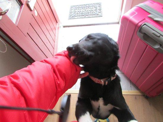 Hraunsnef Country Hotel: El perrito cariñoso