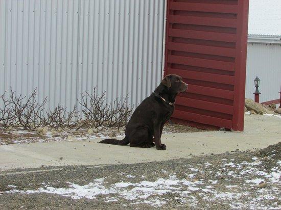 Hraunsnef Country Hotel: El perro jefe