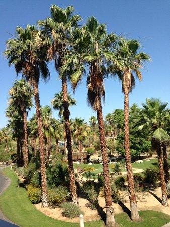 Hyatt Regency Indian Wells Resort & Spa : Beautiful Palm Trees View From Room