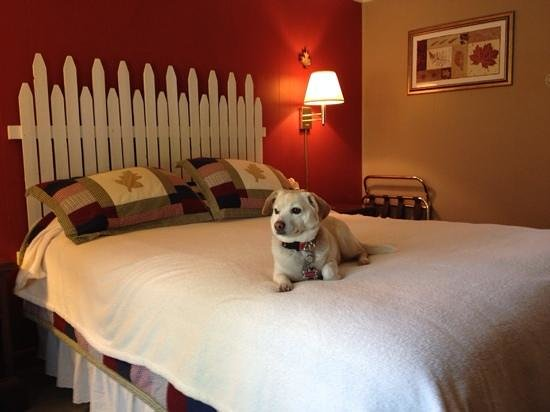 Emma enjoying the cozy bed at the Casablanca Motel