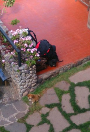 Casa de Campo Hotel : The hotel's friendly pets