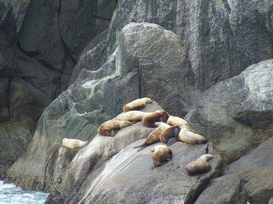 Taking a nap picture of kenai fjords tours seward for Sideboard tess 05