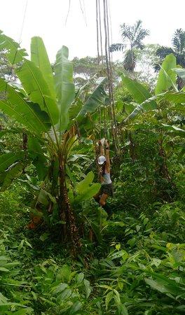 San Pedro Lodge E.I.R.L.: Tarzan vine swinging