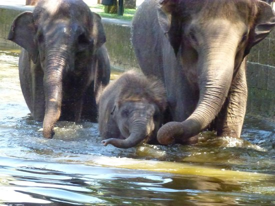 Elephant Safari Park & Lodge : Baby elephant swim time