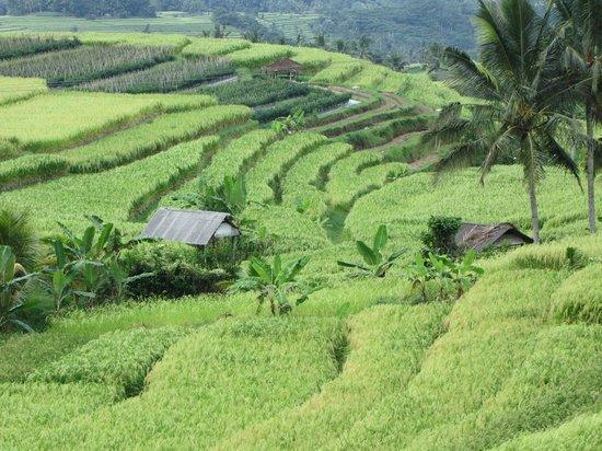 Bali Traditional Tours - Day Tours: Bedugul Tour
