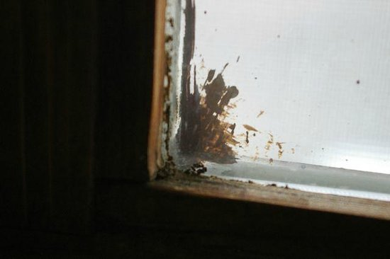 Best Western By Mammoth Hot Springs: paint splatter on window