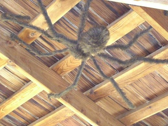 ABQ BioPark Zoo: Butterfly Hut - Giant spider on ceiling