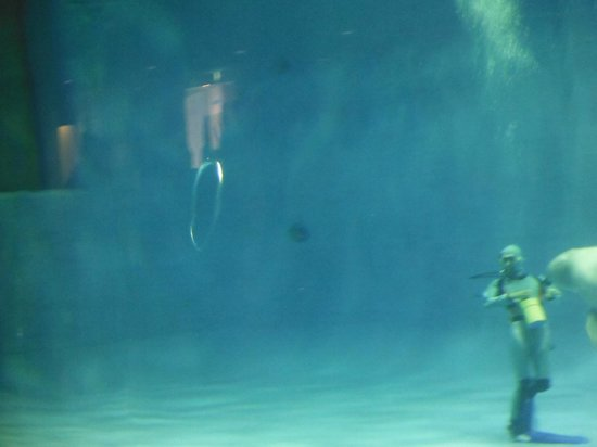 Aquas: しまね海洋館 アクアス(シロイルカショー マジックリング)