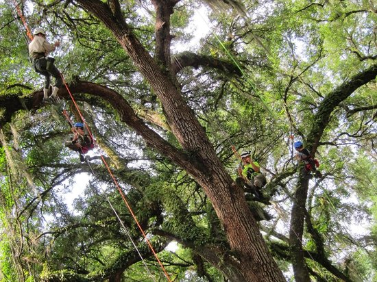 Canopy Climbers: Halfway up to the top!