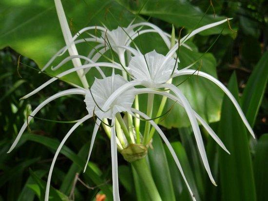 Rayavadee Resort: Beautiful Tropical Florals