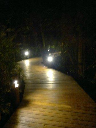 La Aldea de la Selva Lodge : sendero nocturno