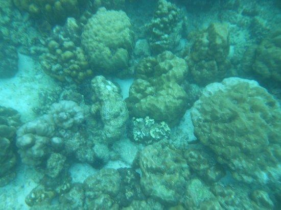 Centara Grand Beach Resort Phuket: Phi Phi Island tour- great snorkeling