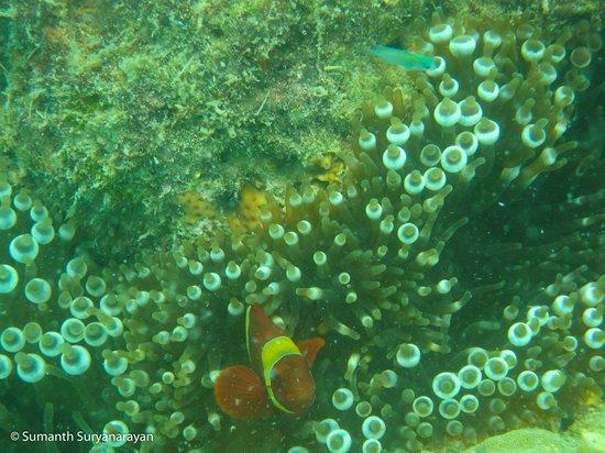 Andaman Bubbles: Live Corals
