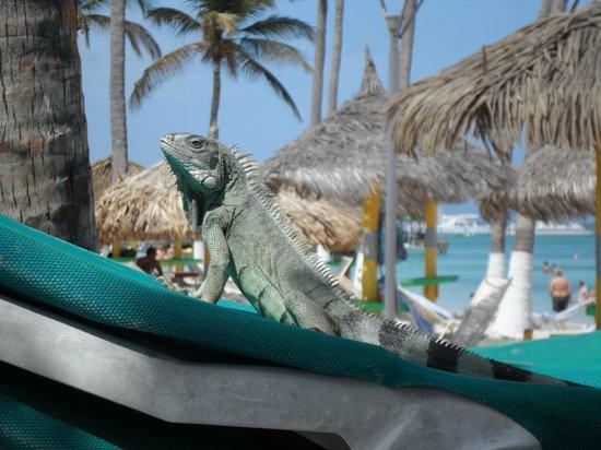 Holiday Inn Resort Aruba - Beach Resort & Casino: La playa frente al hotel