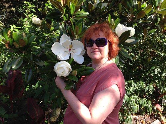 The Royal Botanic Garden : Beautiful Magnolia