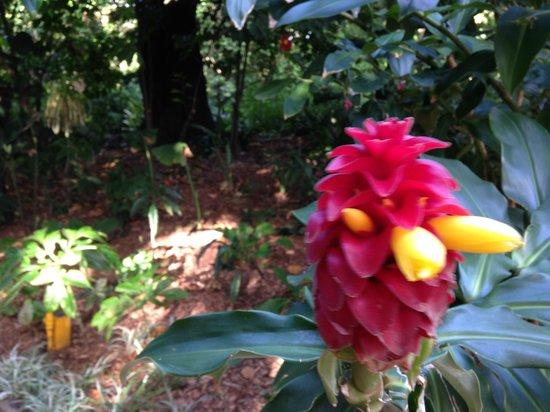 The Royal Botanic Garden : Interesting plants