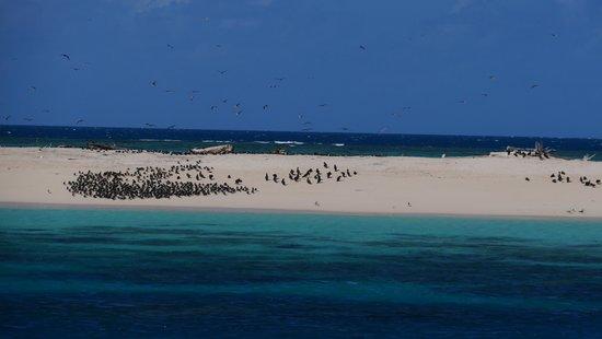 Michaelmas Cay : 青い海、白い砂浜、青い空