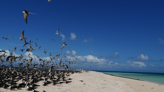 Michaelmas Cay : 鳥たちにも楽園