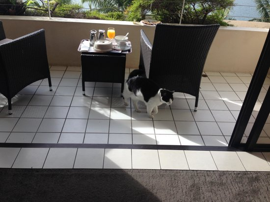 Hilton Cairns: The Visiting Cat!