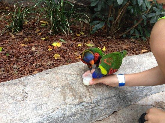 Jardines Busch: Feeding the parrots!