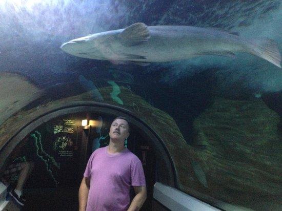Sea Life Sunshine Coast: In the underwater tunnel