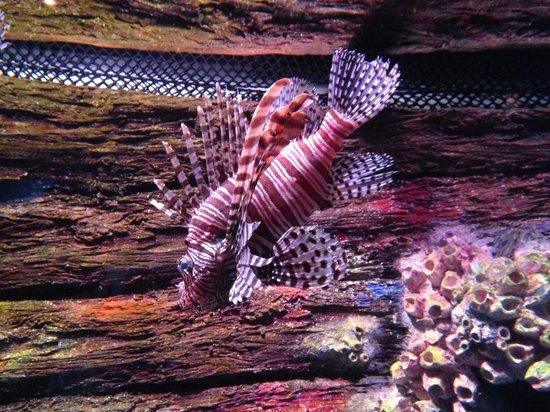 Underwater World Sea Life Mooloolaba : Exotic fish
