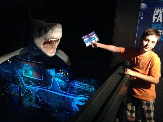 Underwater World Sea Life Mooloolaba : A hungry shark
