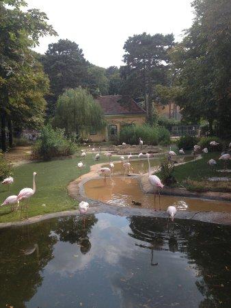Tiergarten Schoenbrunn - Zoo Vienna : beautiful flamingo enclosure
