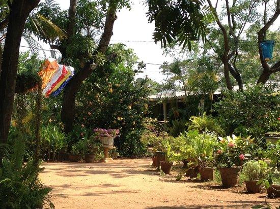 Nilmini Lodge: lovely front garden