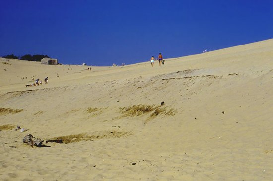 cima della duna picture of dune du pilat la teste de buch tripadvisor. Black Bedroom Furniture Sets. Home Design Ideas